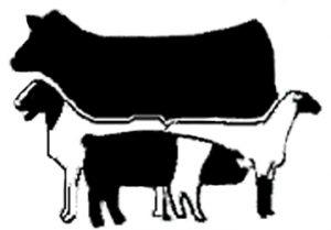 market-sale-animals