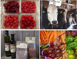 Berries-Cows-Hazelnuts-Vegetables