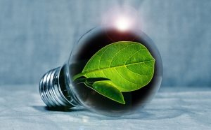 small green leaf in a light bulb