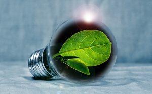 small green leaf in a light bulb