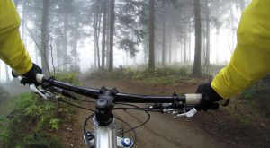 looking at the path in the woods over handlebars