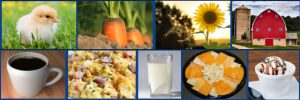 chick, carrots, sunflowers, red barn, second row coffee, scrambled eggs, milk, cheese tray, ice cream scoop